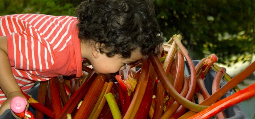 examining rhubarb